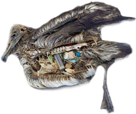 midway-dead-bird-stomach-plastic-toxic